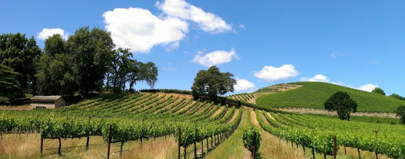 Vineyard-Sonoma-1400-550-web
